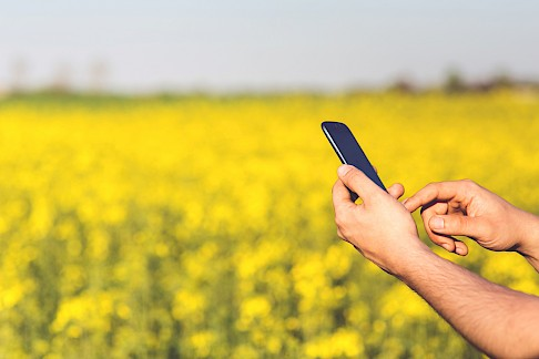 Man using phone in flower field